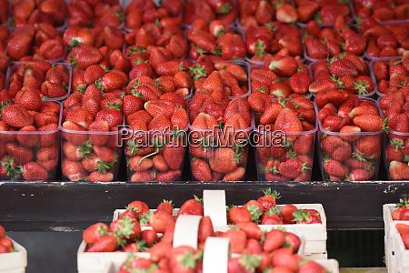 becher mit frischen erdbeeren auf dem