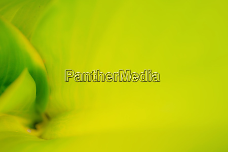 closeup of green leaf in the