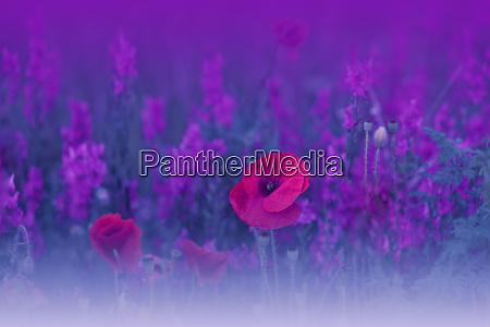 beautiful blue nature backgroundmacro photo of