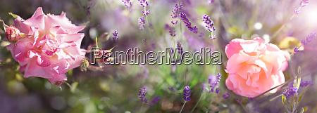 atmospheric garden impressions