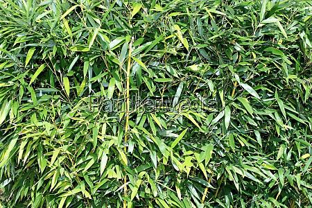 bamboo pattern horizontal
