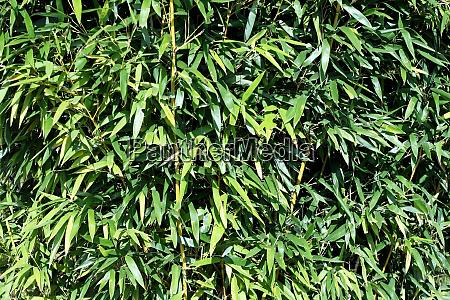horizontal bamboo pattern
