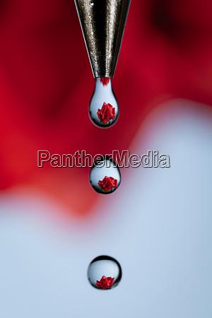 water helps grow roses