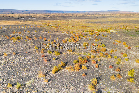 aerial view of small bushes in