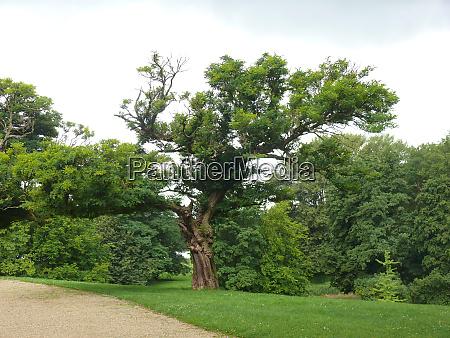tree in braunschweig