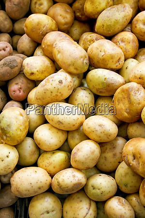 potato vertical