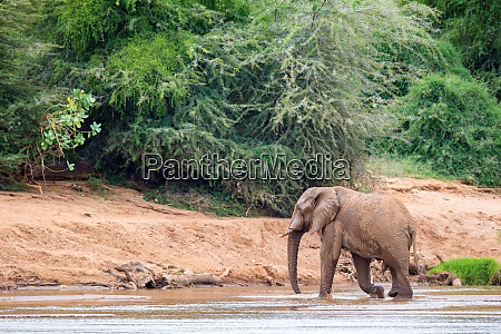 elephant family on the banks of