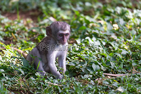 a little funny monkey is playing