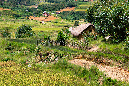 landscape shots of green fields and