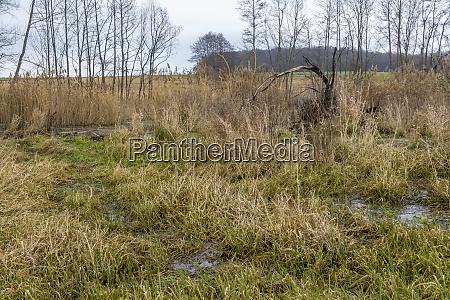 beaver habitat