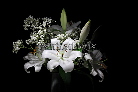 bouquet of pure white lilies