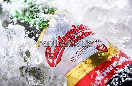 bottle of budweiser budvar beer in