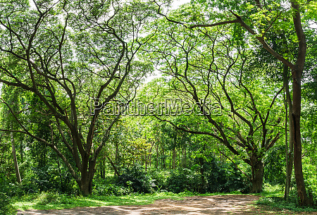 panoramic tropical rain forest jungle in