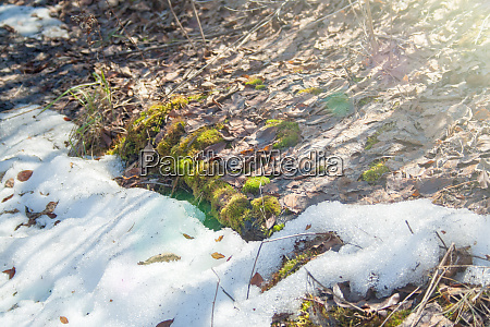 melting snow with green moss