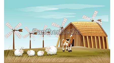 animals are grazing in the farm