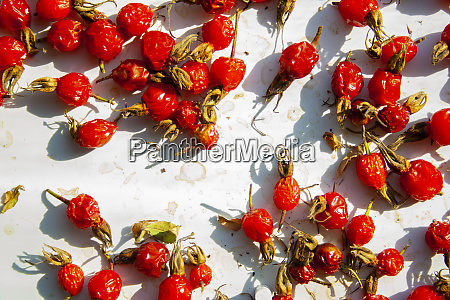 many rose hips are dried in