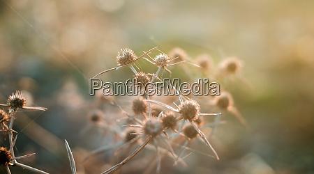 wild thorns in the desert