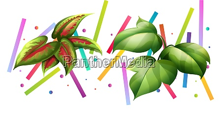 different types of leaves on colorful