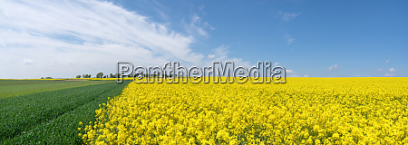 picturesque agricultural fields in spring