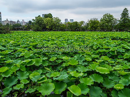 beautiful lakes covert with green plants