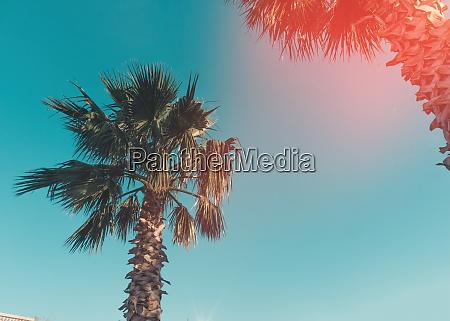 palms in the sunlightbatumigeorgia