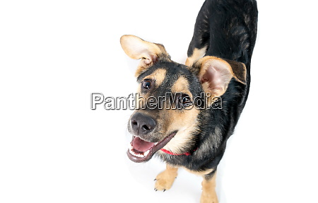 mixed breed dog portrait on the
