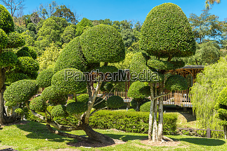 topiary box trees in the botanical