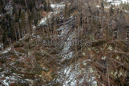 storm damage in the forest