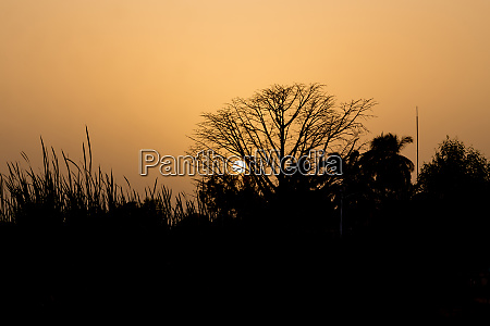 sunset with silhouetted trees