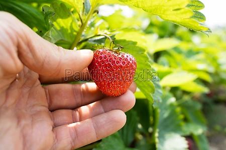 picking fresh food at farm