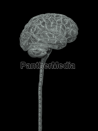 human nervous system brain clipping path