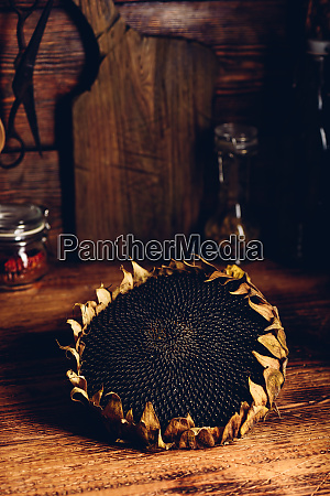 dry sunflower head