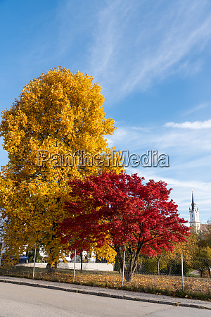 different colored maple trees with panorama