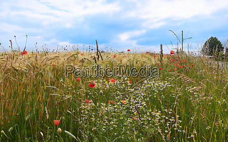 rural scene with grain and flowers