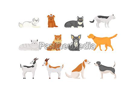 domestic animals flat color vector characters