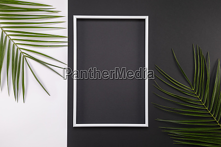 frame of tropical palm leaves on