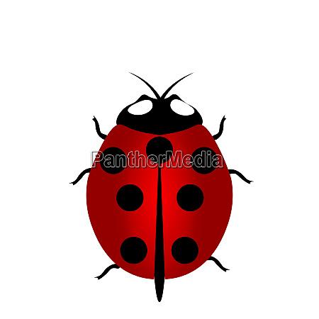 ladybird icon red ladybug