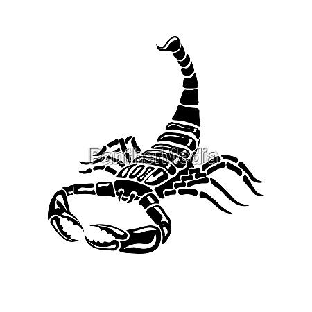 aggressive black and white scorpion for