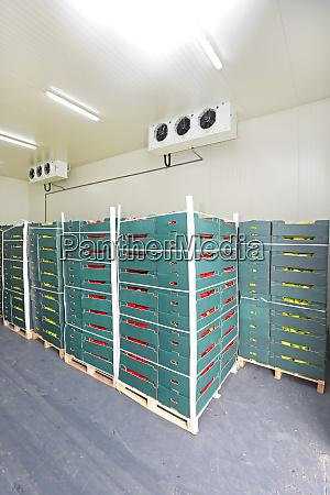 cold storage pallets