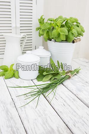 frehs green herbs still life
