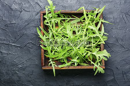 green fresh rucola leaves