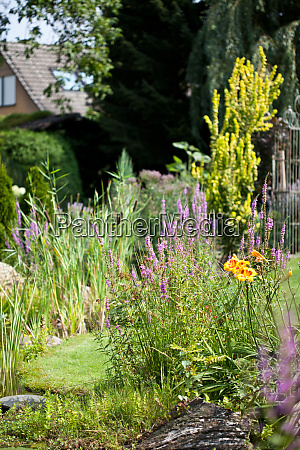 beautiful garden in summer