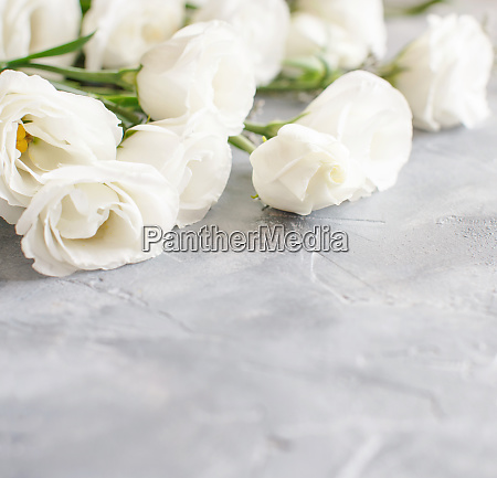 white flowers on a grey background
