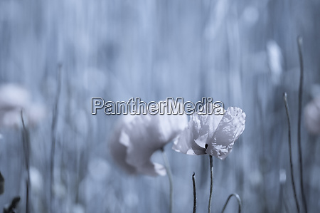 dark blue floral background