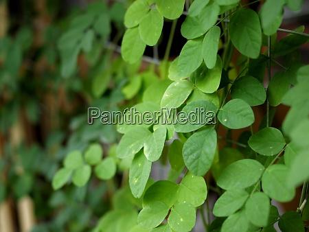a colour photo of fresh green