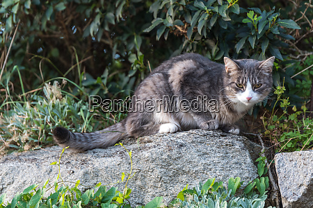tired cat on stone wall