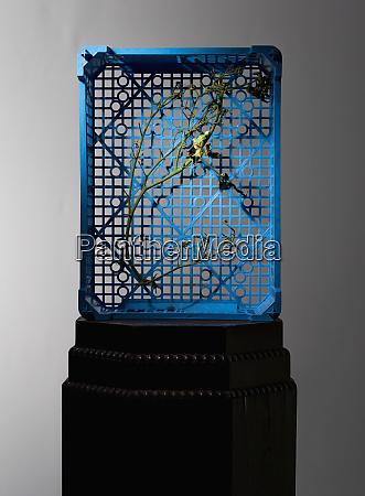 dead branch inside blue crate