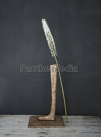 white flower stem leaning against wooden