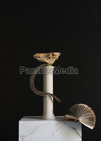 animal skull scythe and book on