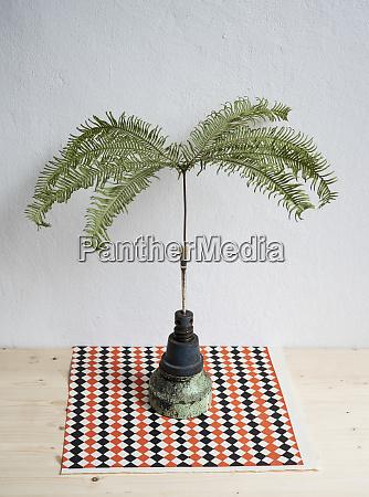 still life tropical plant in unique